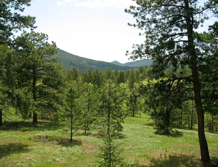 sternberg-mountain-cabin-3